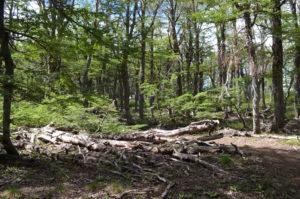 Bosque en periodo estival