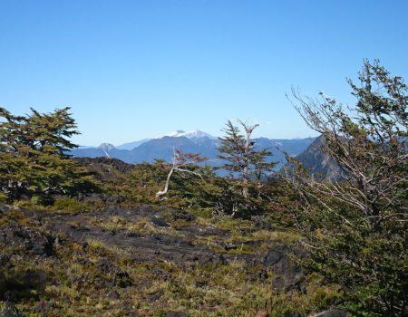 Bosque y vista Mocho Choshuenco