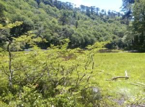 Lago en el Parque Nacional Huerquehue