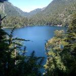 Laguna, volcán al fondo y árboles nativos de chile